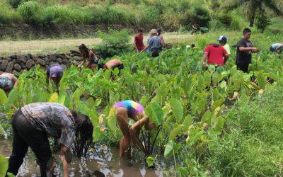 Huliau Eco-Adventure Summer Program